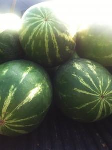 fortnegrita_melons